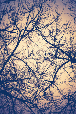 Crooked dark branches of winter trees without leaves in the city park, filtered.