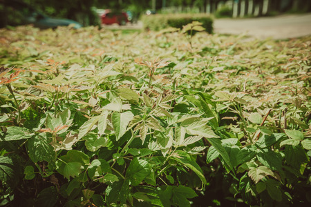 Close up of trimmed bushes in the city park. Stok Fotoğraf - 103680323