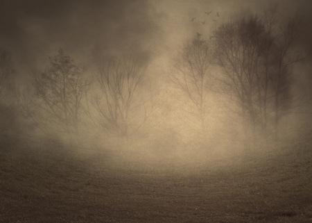 Paisaje brumoso oscuro con árboles sin hojas espeluznantes, fotomanipulación, ilustración.