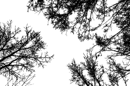 Grunge crooked tree branches without leaves, black silhouettes on white.