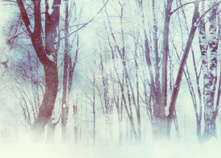 White winter trees in the park under snowfall, photomanipulation. Stok Fotoğraf - 121525774