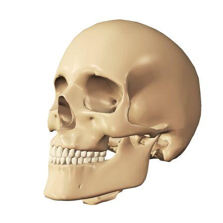 Body part, 3d human skull digitally rendered illustration.