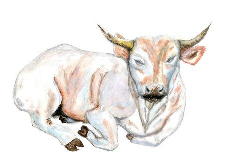 Watercolor illustration of white bull hand drawn design. Reklamní fotografie - 137767469