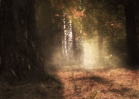 Mysterious autumn forest and soft golden sunrays, photomanipulation. Archivio Fotografico