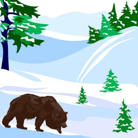 Bear Stock Vector - 14271267
