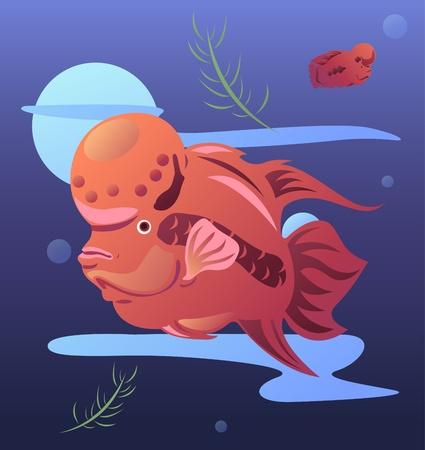 Two of cichlids fish in the aquarium  Vector