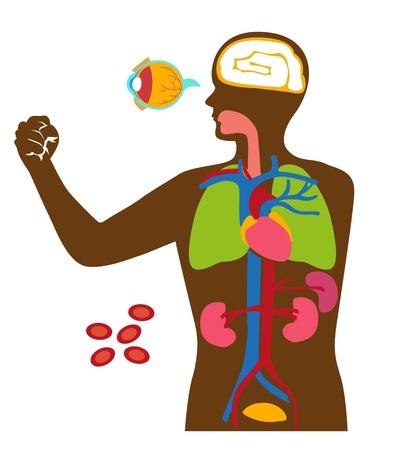 人間の体の中の器官。  イラスト・ベクター素材