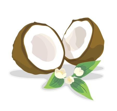 oily: Coconut for coconut milk. Illustration
