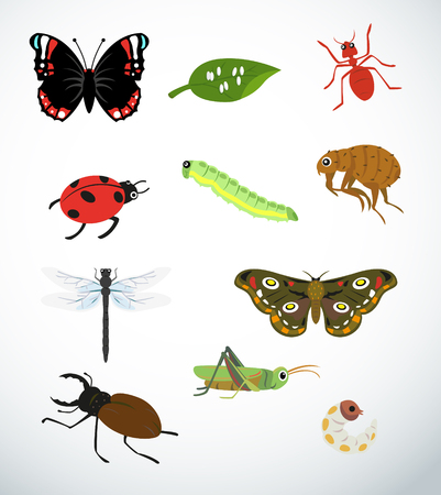 Collection for various types of insects  Vector