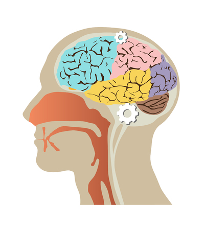 parietal: Images of the human head within the skull and brain