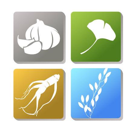 葉ニンニク、高麗人参、ご飯、銀杏などのハーブとして使用されるアイコン  イラスト・ベクター素材