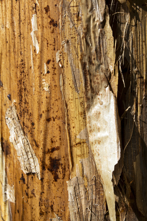 fibrous: Surface and texture of leaf sheaf of banana tree. Fibrous layer on the trunk of the banana tree. Stock Photo