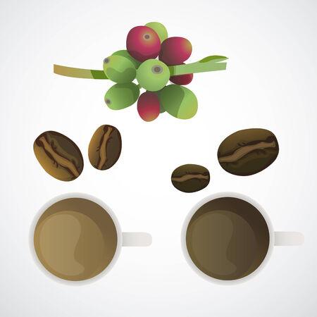 chicchi di caff�: Chicchi di caff� e due tazza di cooffee in gusto differen