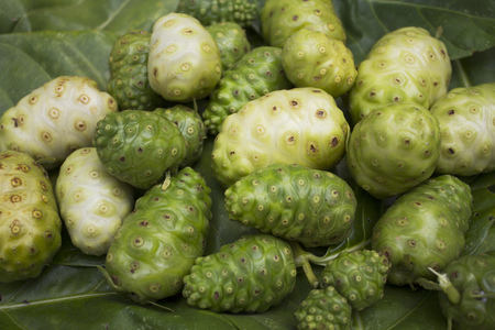 great morinda: Great morinda on mulberry leaves.