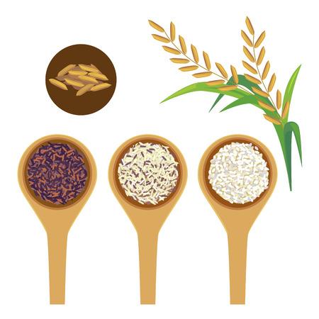 Bolas de arroz y arroz en el fondo blanco. Ilustración de vector