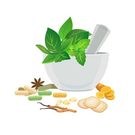 Traditionelle Medizin - Frische und getrocknete Kräuter für die Medizin. Vektorgrafik