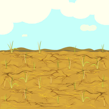 Arid - vector of dried fields rice. 矢量图像
