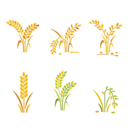Vector- collect of rice icon and rice growth and drought.