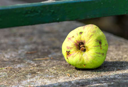 Picture with green damaged apple with wormholes
