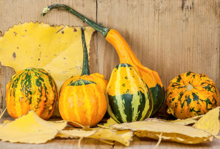 Colorful gourds arrangement with autumn leaves. Still life