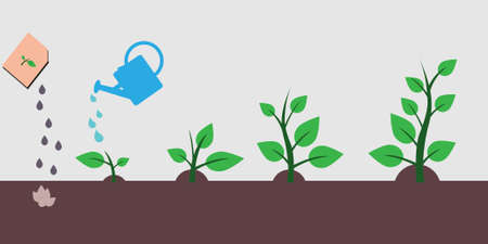 The process of planting a tree and stages of growth of a tree from a seed