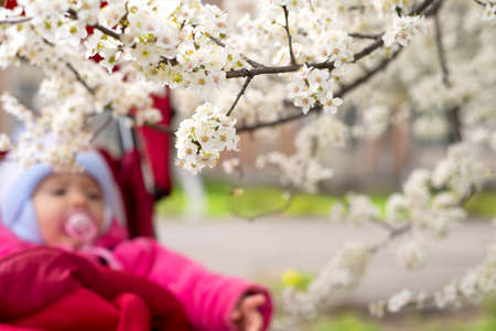 Blossoming tree with little baby in background