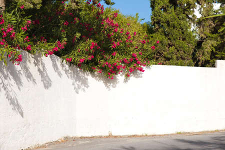 Red bougainvillea on a white wall outdoors in Greece Stock fotó - 127973092