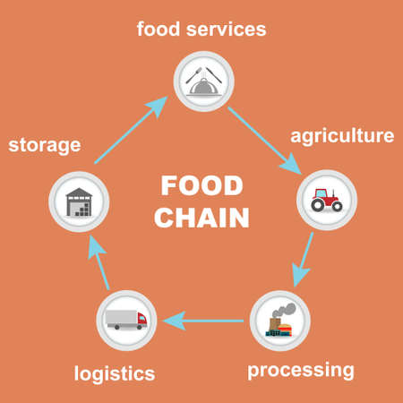 Different food chain stages interconnected Stock Illustratie