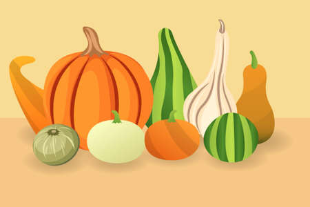 Different types of pumpkins and gourds, conceptual vector