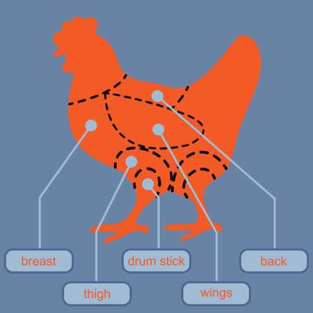 Chicken meat diagram, conceptual vector Illustration