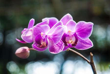 Pink streaked orchid flower Reklamní fotografie