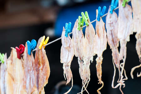 The neatly hanging of dried squid for sale Reklamní fotografie
