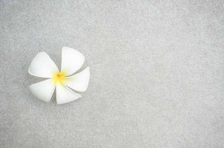 plumeria flower on the floor
