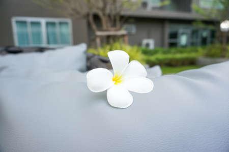 Plumeria flower on a pad whit blur background 版權商用圖片