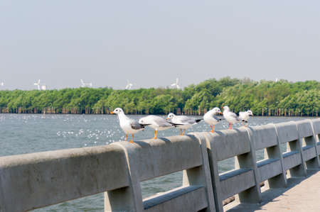 Seagull in mangrove forest selective focus