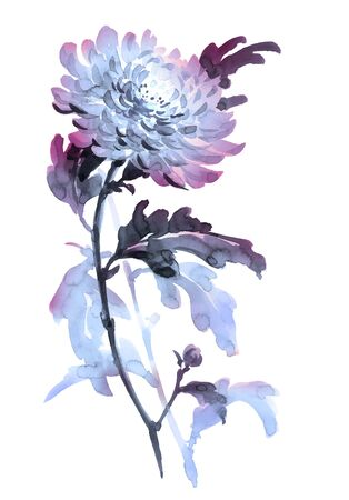 gohua: Ink illustration of flower chrysanthemum. Sumi-e, u-sin, gohua painting style, colored with blue and violet colors. Silhouette made up of brush strokes isolated on white background.