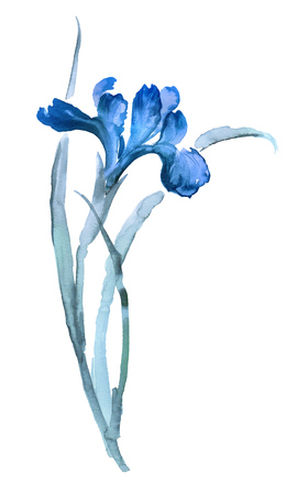 Ink illustration of iris flower. Sumi-e, u-sin, gohua painting style, colored with blue colors. Silhouette made up of brush strokes isolated on white background. Illustration