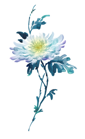Ink illustration of flower, blooming chrysanthemum. Sumi-e, u-sin, gohua painting style colored in shades of blue with yellow. Silhouette made up of brush strokes isolated on white background.