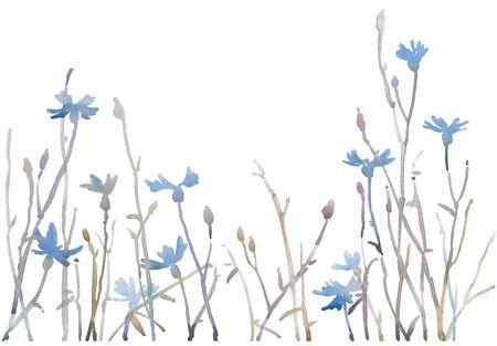 Aquarel handgeschilderde blauwe korenbloemen.
