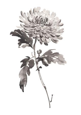 Inktillustratie van chrysant in bloei. Sumi-e, u-sin, gohua schilderstijl. Silhouet dat uit zwarte borstelslagen wordt samengesteld die op witte achtergrond worden geïsoleerd.