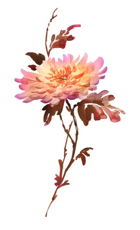 Ink illustration of flower, blooming chrysanthemum. Sumi-e, u-sin, gohua painting style colored in shades of red, brown and yellow. Silhouette made up of brush strokes isolated on white background.
