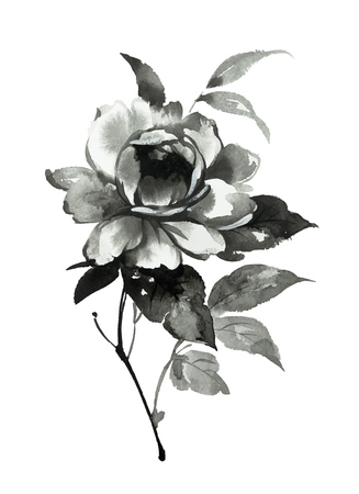 Ink illustration of flower, blooming peony. Sumi-e, u-sin, gohua painting style. Silhouette made up of black brush strokes isolated on white background.