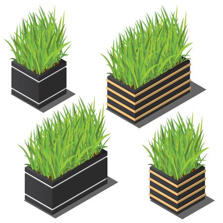 Isometric plant in modern pot small set. Fresh green herbs Illustration