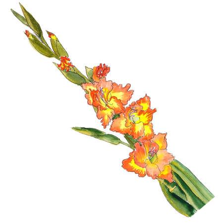 Aquarell botanische Skizze der Gladiolus gelbe Blume mit einem orangefarbenen Rand Standard-Bild - 94260997