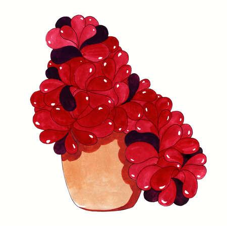 Fresh flowers for interior decoration in pots pink lilac red burgundy violet. Set watercolor illustration. Hemigraphis alternata flower
