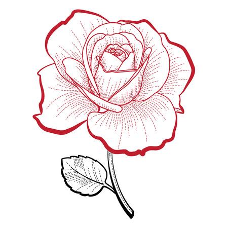 手描きのイラストが印刷やデザイン ローズ  イラスト・ベクター素材