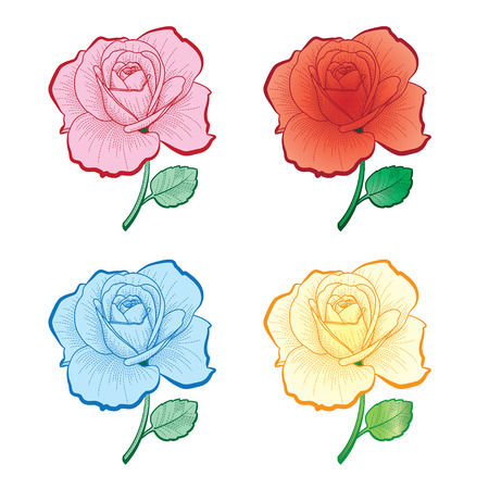 Illustration set of color  roses for print and design