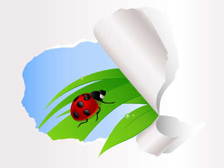 ladybird sitting on green grass on the ripped paper background Vector