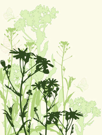 Background with green camomile flowers  and butterfly