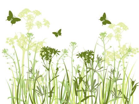 achtergrond met groene gras, Kamille bloemen en vlinder